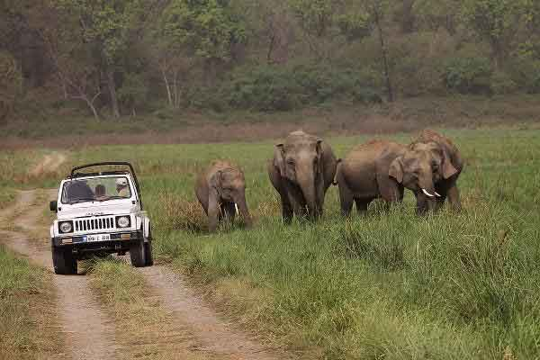 Jim Corbett with Nainital(Winter Special) Tour